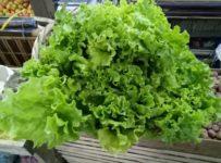 Bipanan Khetra, Guwahati. organic product