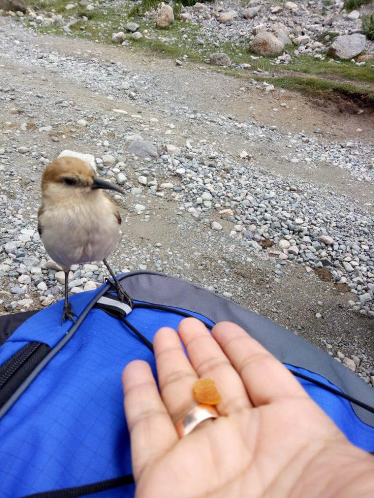 go;den bird enroute to mt kailash