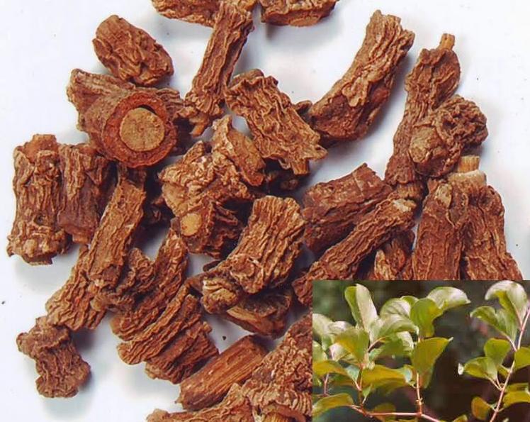 Nannari roots and plant